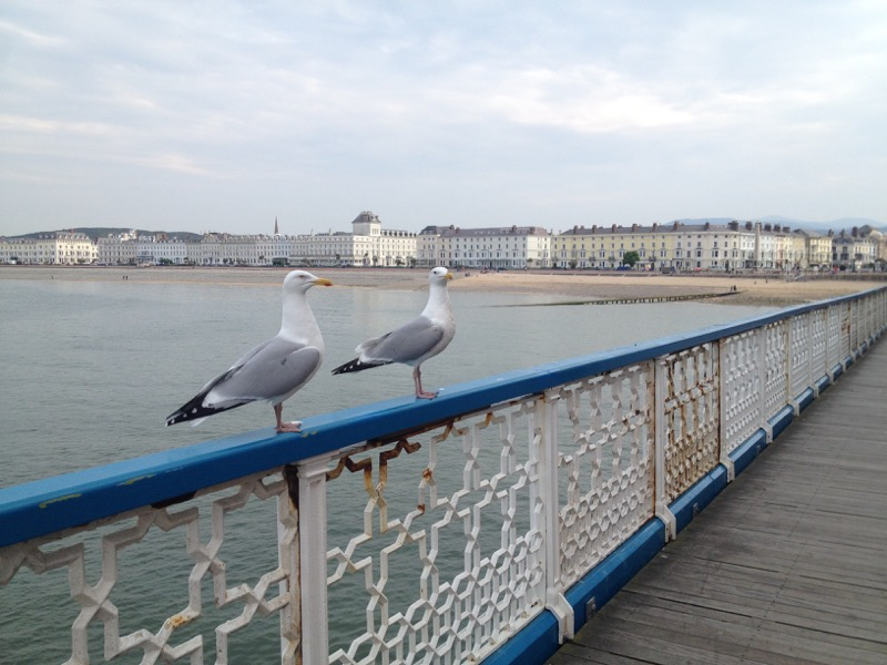 Llandudno - seagulls