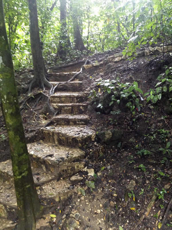 Jungle stairs