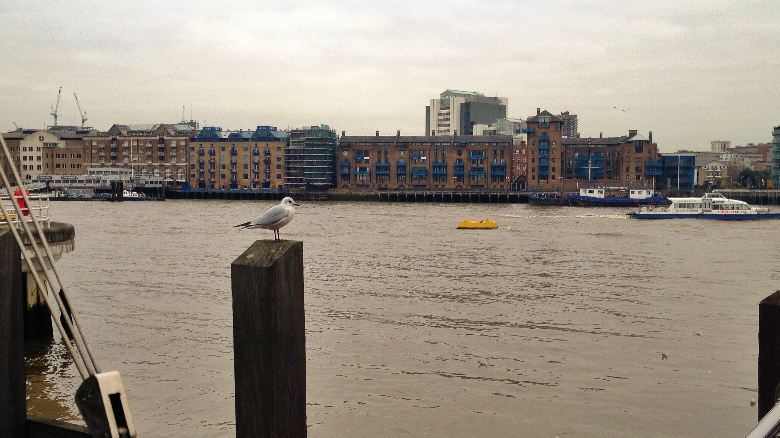 Seagull & the Thames